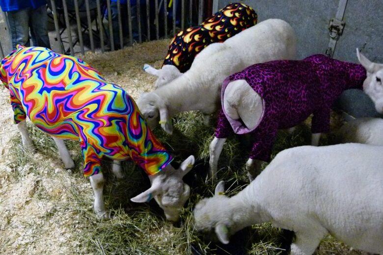 カラフルな衣装を着た山羊の集団